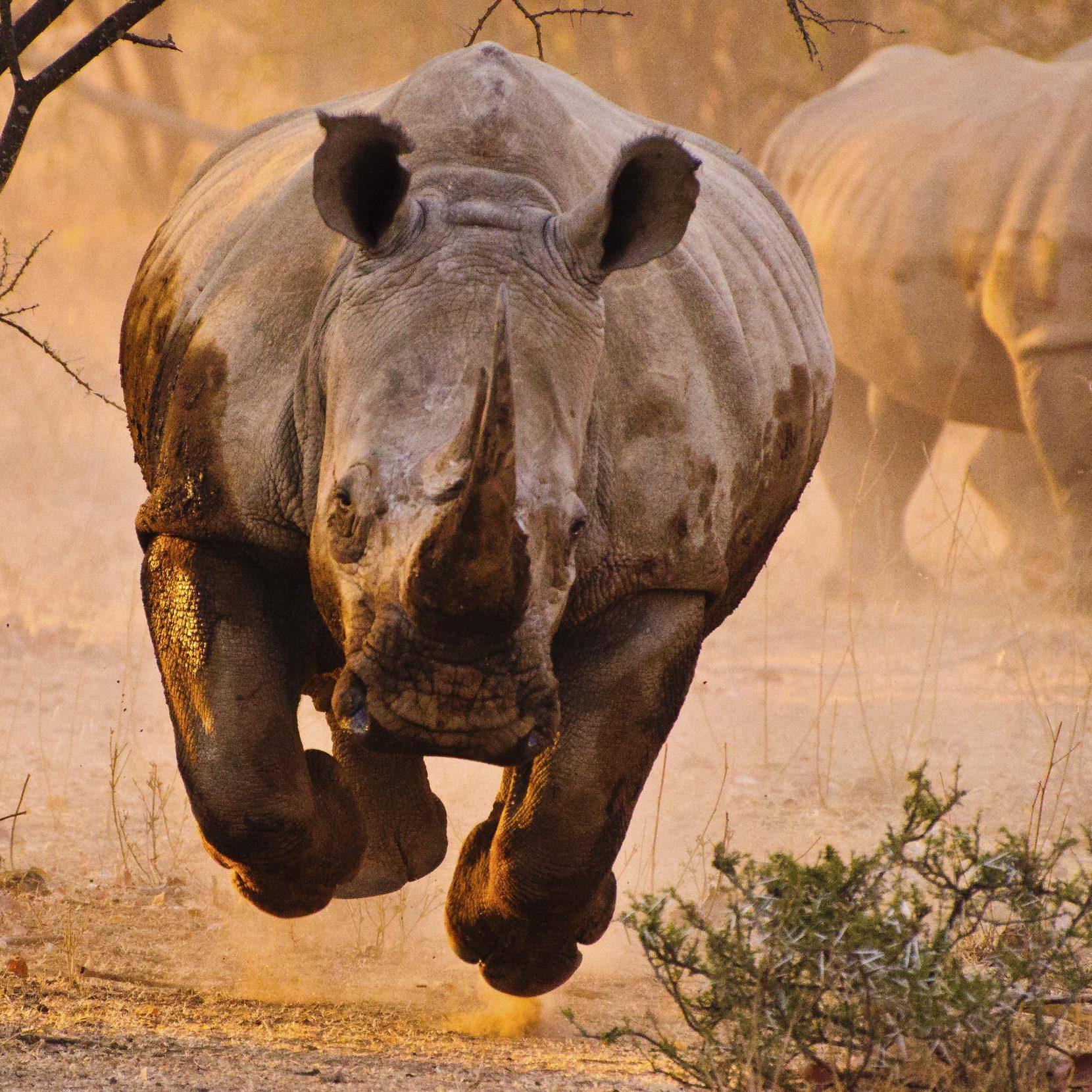 rhino-18